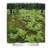 Woodland View In A Pine Forest Shower Curtain