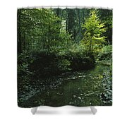 Woodland View With Stream Shower Curtain