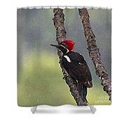 Woodpecker 4 Shower Curtain