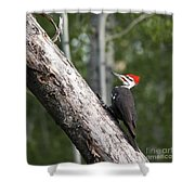 Woodpecker Sizes Me Up Shower Curtain
