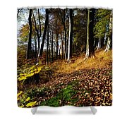 Woods During Autumn Shower Curtain