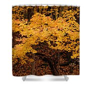 Woods Of Yellow Shower Curtain