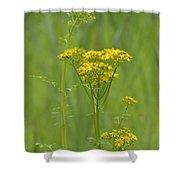 Woolly Ragwort Shower Curtain