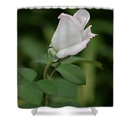 World War II Memorial Rose Shower Curtain