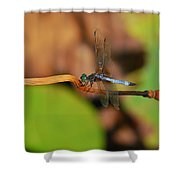 Wounded Wing Shower Curtain