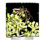 Wrangling Wasps Shower Curtain