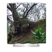Wrap Around Tree Shower Curtain