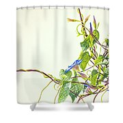 Wren And Damselfly Shower Curtain