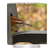 Wren Peeking Out Shower Curtain