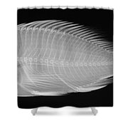 X-ray Of A Flame Hawkfish Shower Curtain