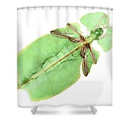 X-ray Of A Giant Leaf Insect Shower Curtain