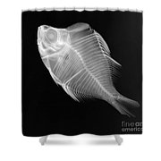 X-ray Of A Humphead Glassfish Shower Curtain