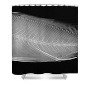 X-ray Of A Striped Sweetlips Shower Curtain