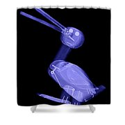 X-ray Of A Wooden Duck Toy Shower Curtain