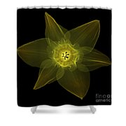 X-ray Of Daffodil Flower Shower Curtain