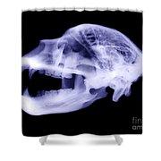 X-ray Of Kodiak Bear Skull Shower Curtain
