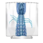 X-ray Of Mantis Shrimp Shower Curtain