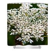 Yarrow Plant Flower Head  Shower Curtain