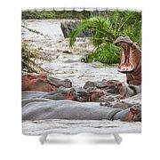 Yawning Hippo Hippopotamus Amphibius Shower Curtain