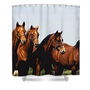 Yearling Thoroughbred Shower Curtain