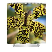 Yellow And Black Spotted Orchid Shower Curtain
