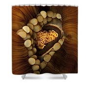 Yellow And Orange Anemone Mouth, Sabah Shower Curtain