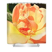 Yellow And Peach Rose Shower Curtain
