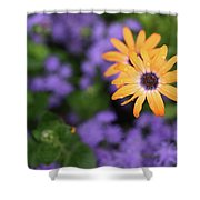Yellow And Purple Shower Curtain