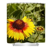 Yellow And Red In The Sunshine Shower Curtain
