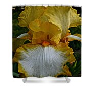 Yellow And White Iris Shower Curtain