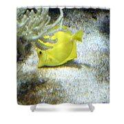 Yellow Angelfish Shower Curtain