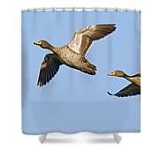Yellow-billed Duck Anas Undulata Pair Shower Curtain