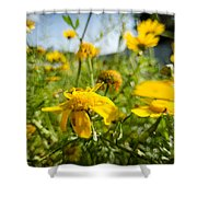 Yellow Blooming Wildflowers Shower Curtain