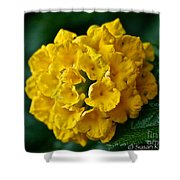 Yellow Blooms Shower Curtain