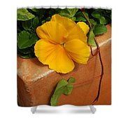 Yellow Blossom On Planter Shower Curtain