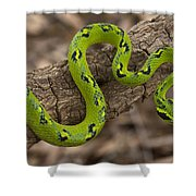 Yellow-blotched Palm Pitviper Shower Curtain