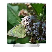 Yellow Cabbage Moth Shower Curtain