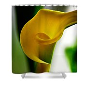 Yellow Calla Lilies Shower Curtain
