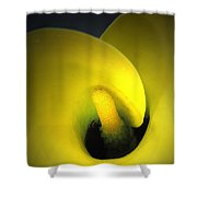 Yellow Calla Lily 1 Shower Curtain