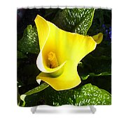 Yellow Calla Lily Shower Curtain