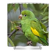 Yellow-chevroned Parakeet Brotogeris Shower Curtain