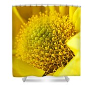 Yellow Chrysanthemum Shower Curtain
