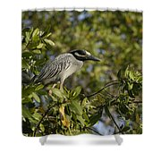 Yellow-crowned Night Heron Shower Curtain