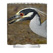 Yellow Crowned Night Heron With Catch Shower Curtain