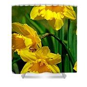 Yellow Daffodils And Honeybee Shower Curtain