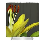Yellow Day Lily Shower Curtain