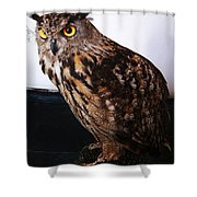 Yellow-eyed Owl Side Shower Curtain