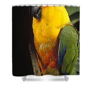 Yellow-faced Parrot Amazona Xanthops Shower Curtain