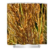 Yellow Feather Reed Grass Shower Curtain