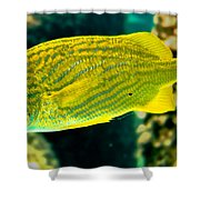 Yellow Fellow Shower Curtain
